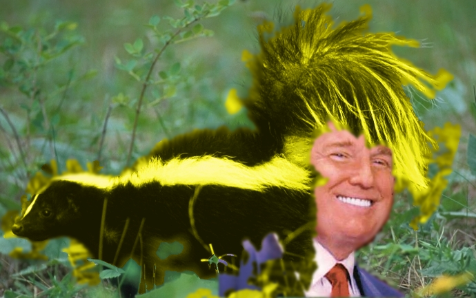Theres An Insane Fluffy Blond Skunk Tail Laying Across Donald