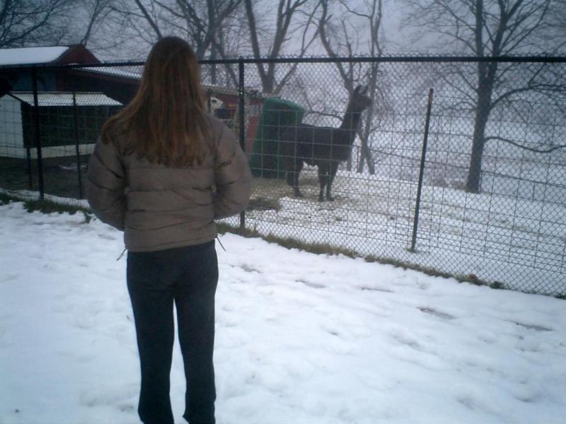 My sister at the alpaca cage