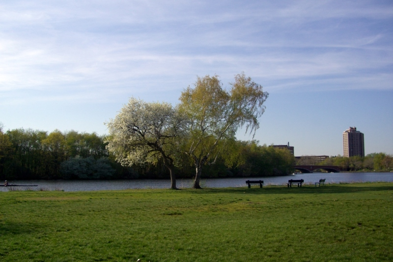 Two trees by the Charles River