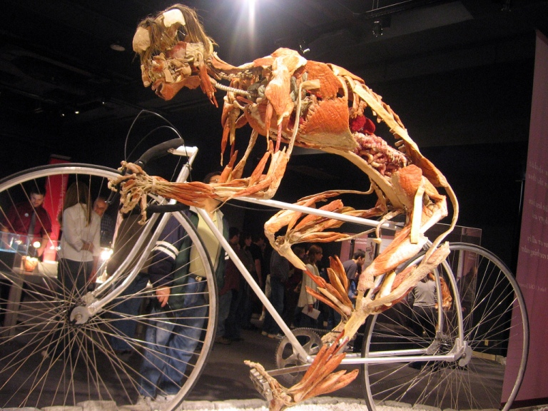 90 years later, Body Worlds by anatomist Gunther von Hagens