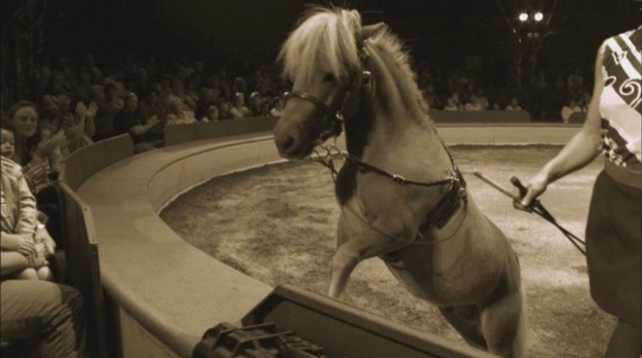 Old George circus 3rdarm
