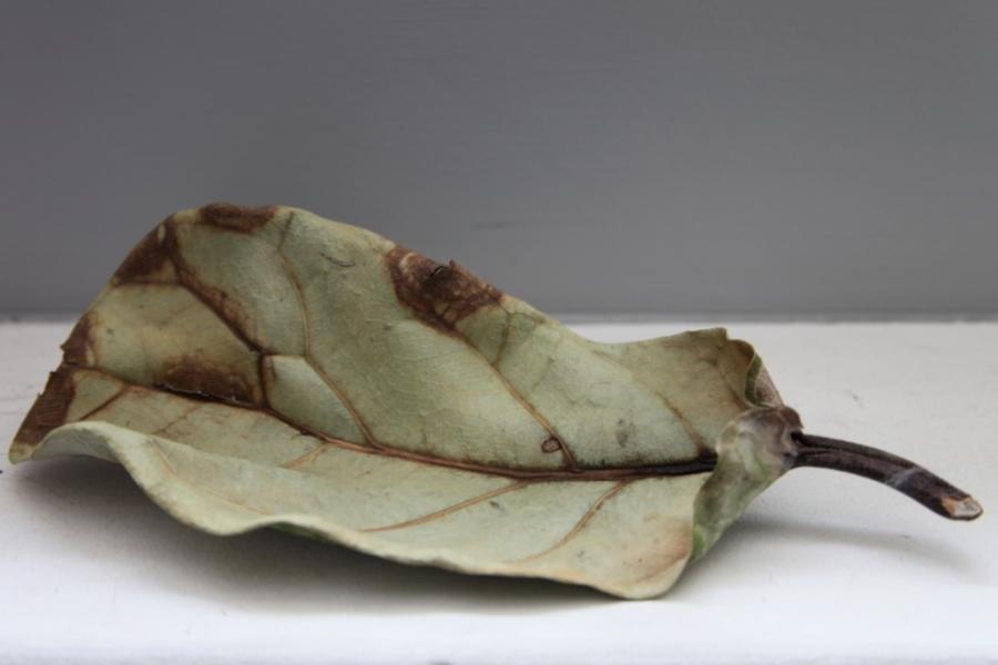 Tree leaf 3rdarm
