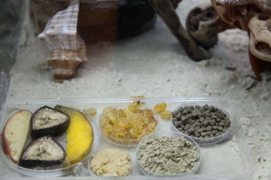 Hermit crab food 3rdarm