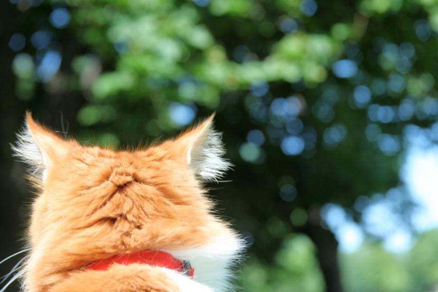 cat head 3rdarm
