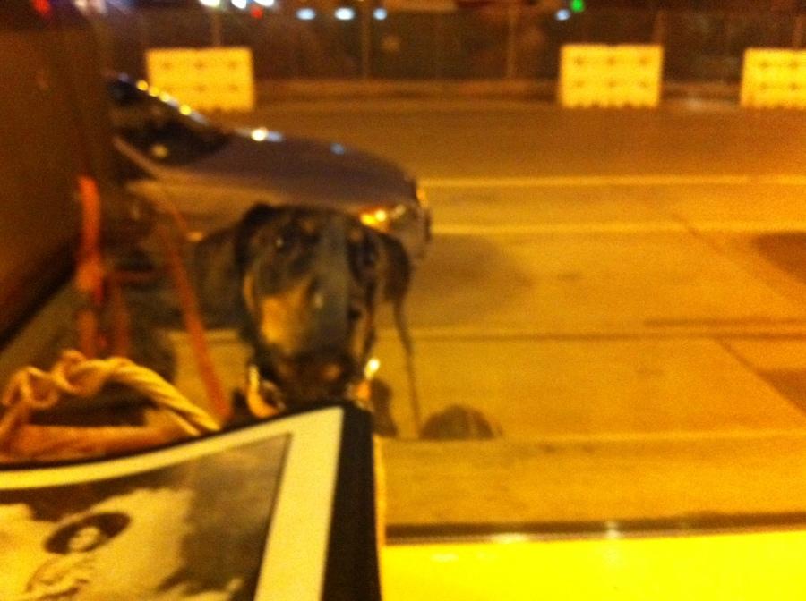 Rufus wants a torta 3rdarm