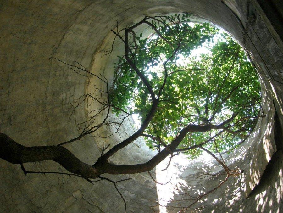 Silo tree 3rdarm