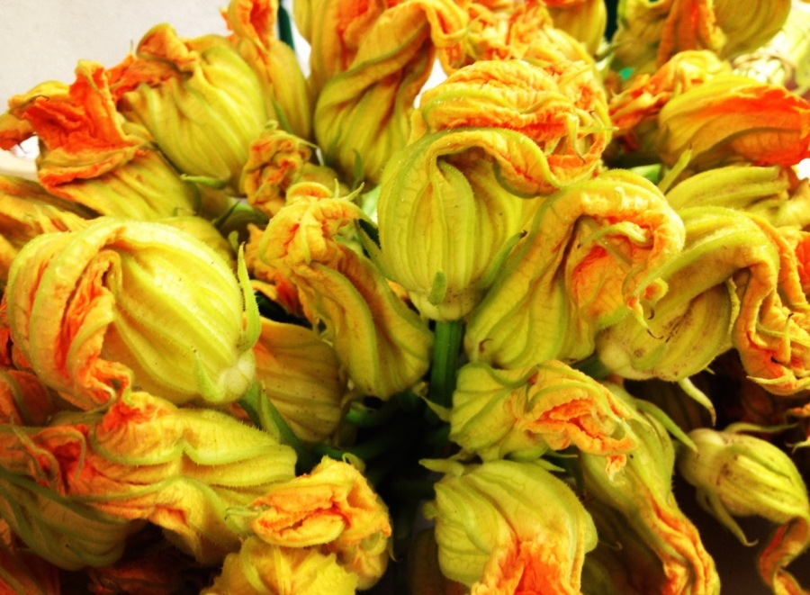 squash blossoms 3rdarm