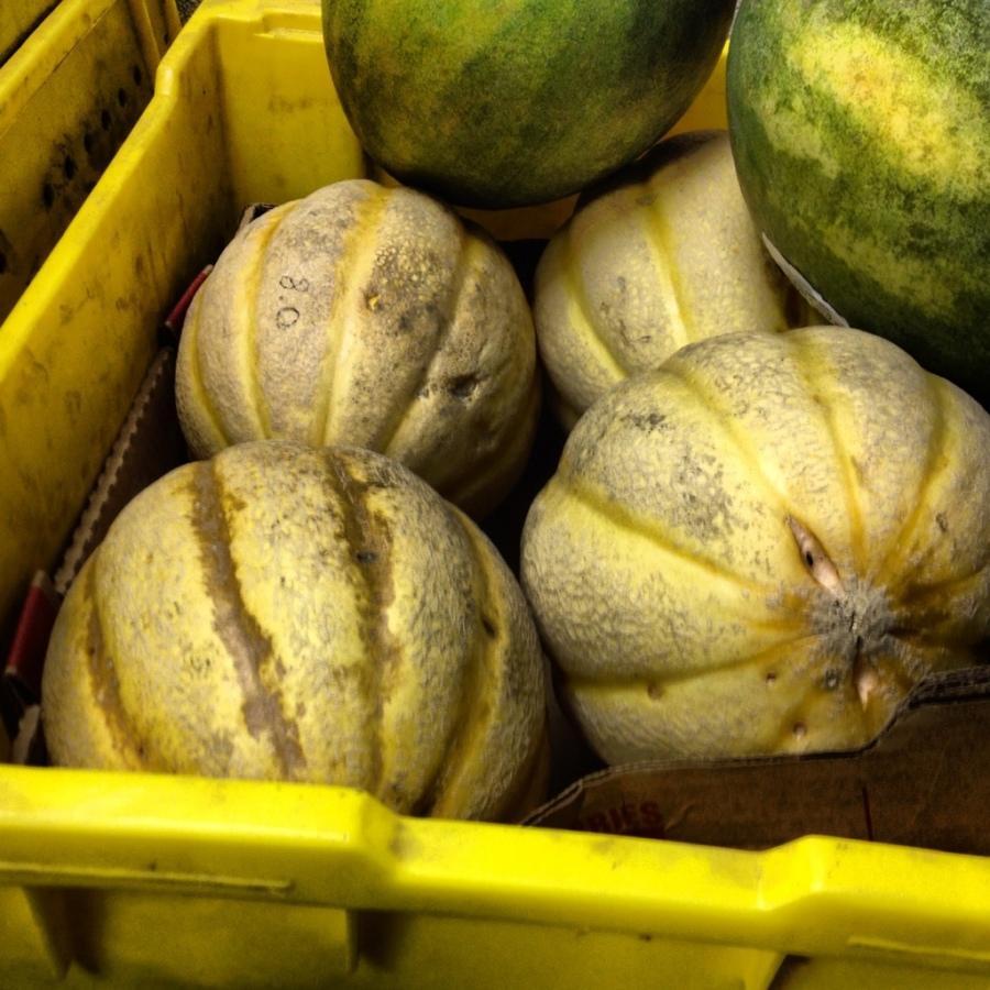 cantaloupe melon 3rdarm frontera