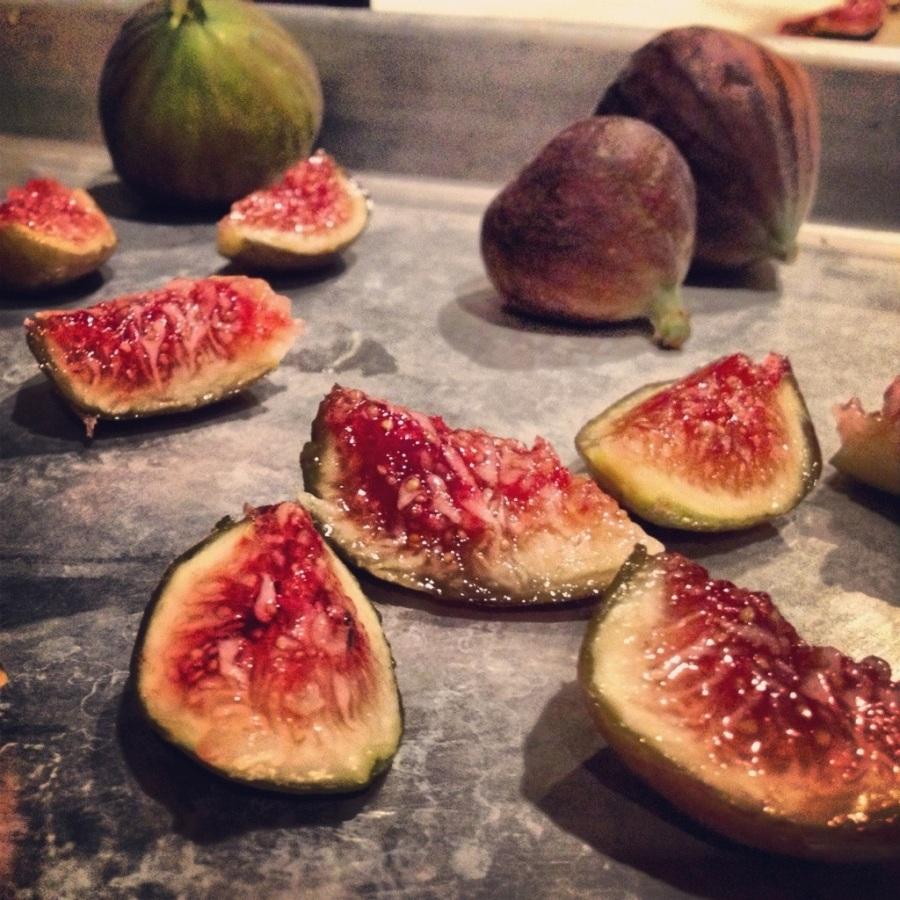 higos seedling farm figs Topolobampo