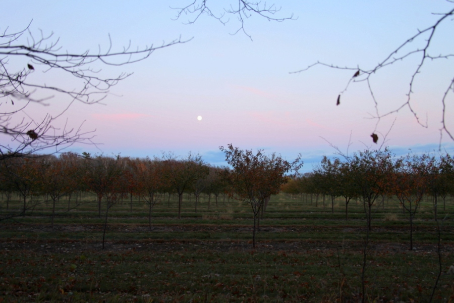 cherry orchards, the day before full moon door county 3rdarm