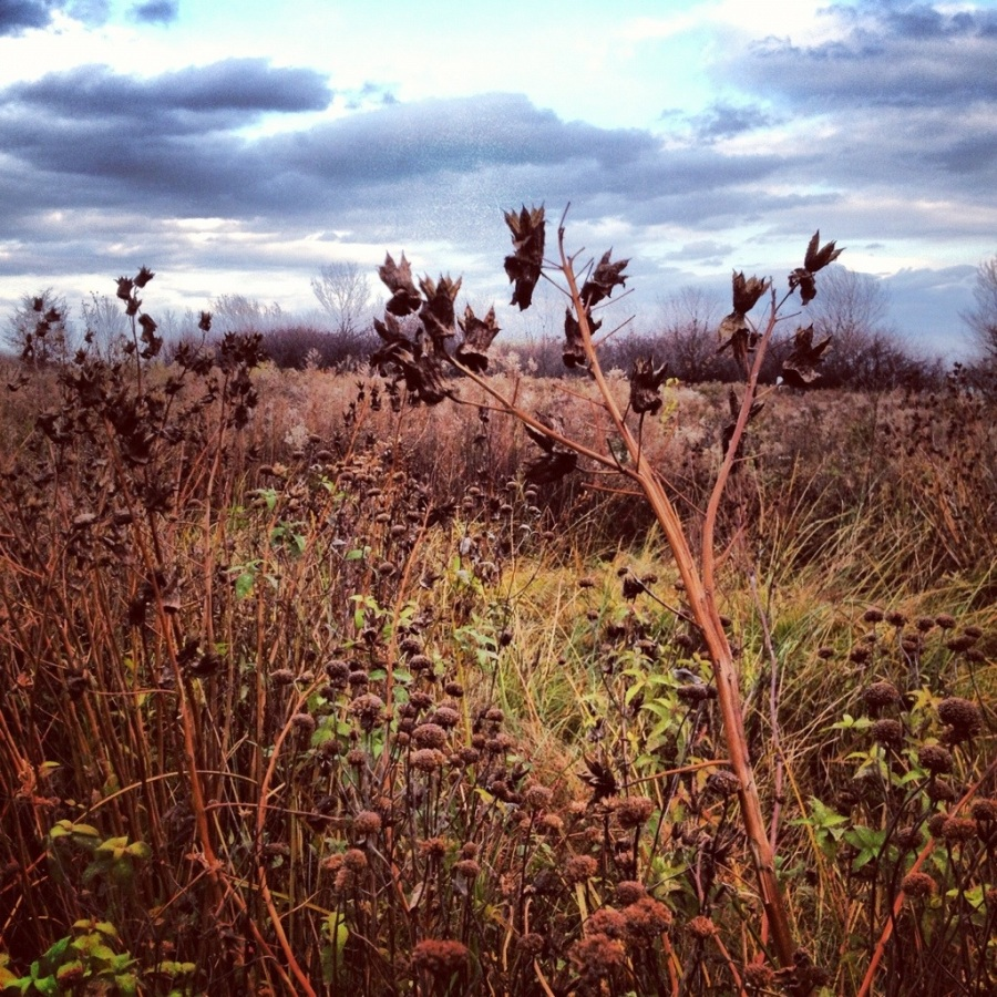 magic hedge bird montrose point 3rdarm