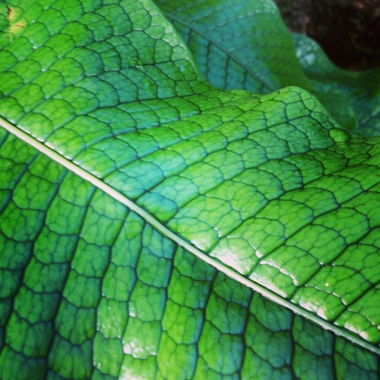 alligator fern garfield park conservatory 3rdarm chicago