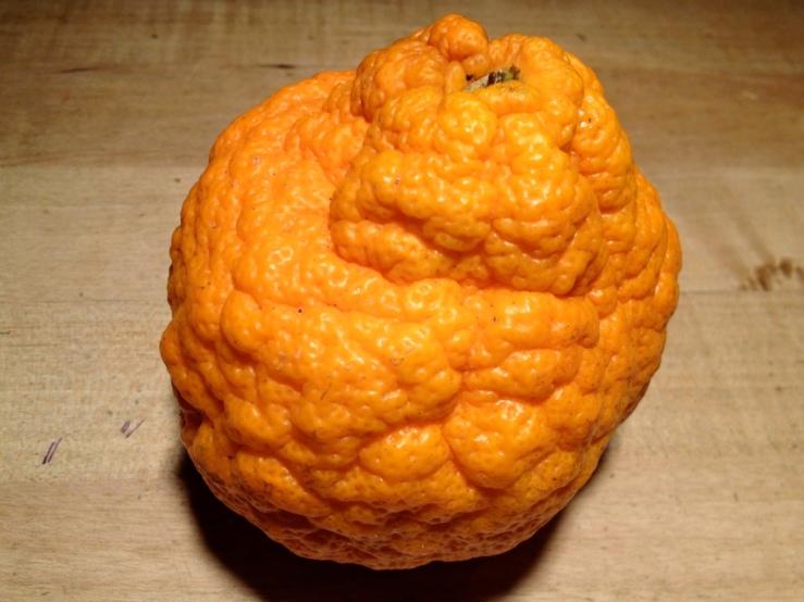topolobampo king orange pork belly bok choy 3rdarm