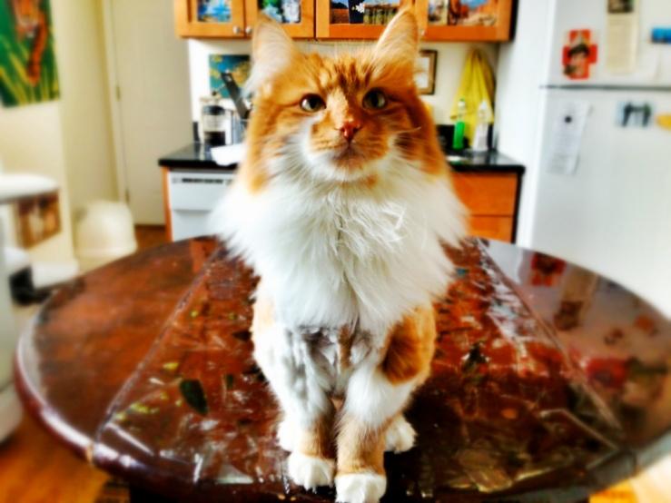 roly poly cat chicago 3rdarm arthur robert mullen iii