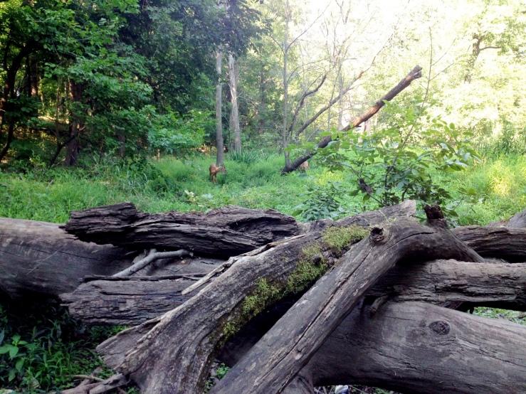 caldwell woods 3rdarm