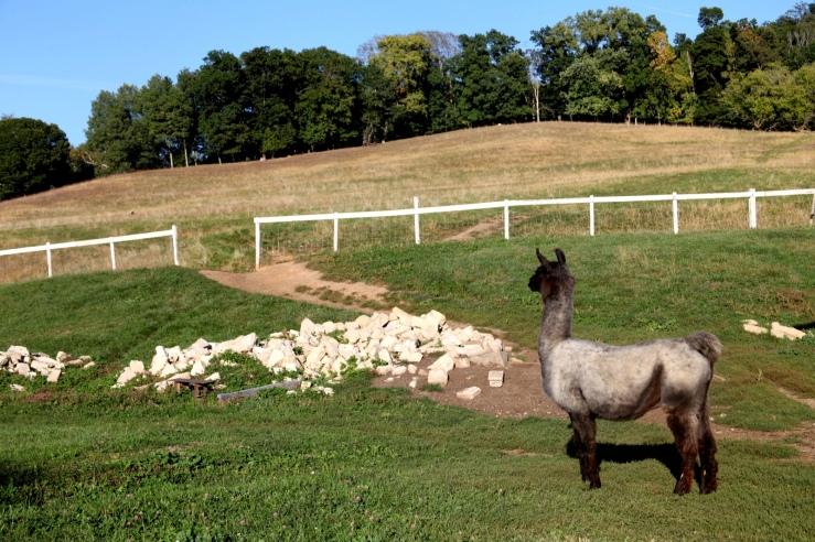 rainbow ridge farm 3rdarm