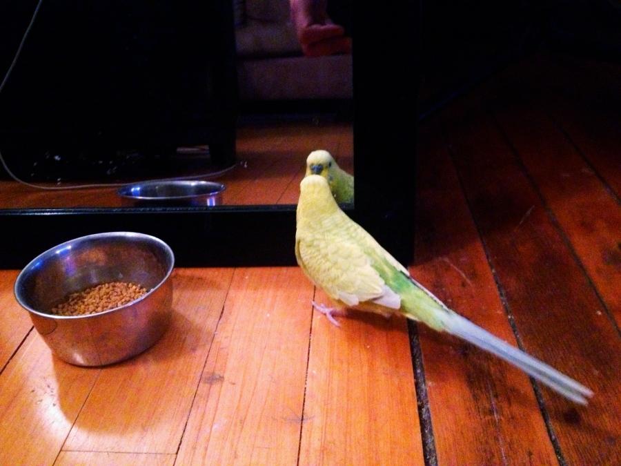 pickle bird in the mirror 3rdarm
