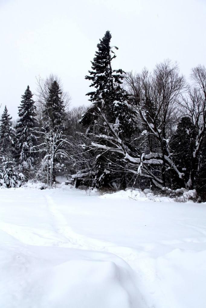 snowy backyard pinehurst inn  bayfield wi 3rdarm