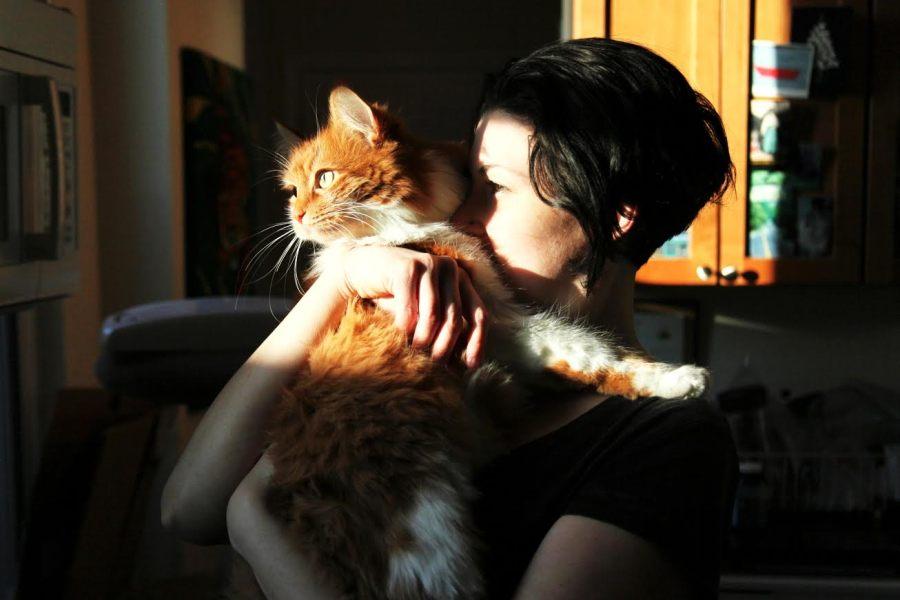 etta roly poly 3rdarm sun cats