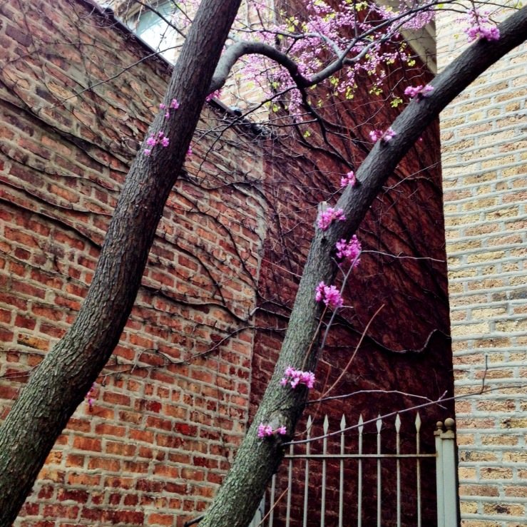 dr seuss tree chicago may spring 3rdarm