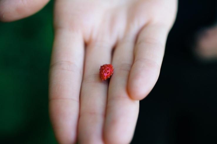 wild strawberry etta kostick 3rdarm