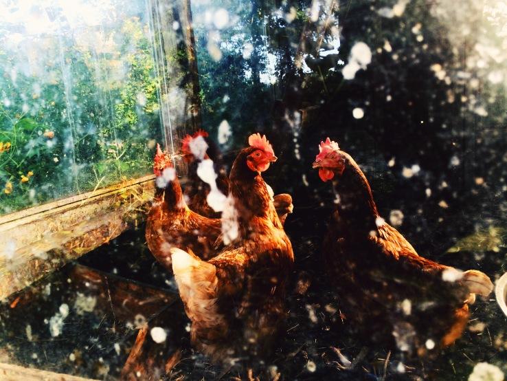 winchendon massachusetts kostick glenn chickens 3rdarm