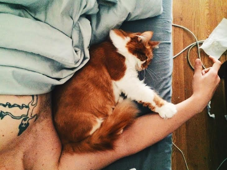 roly poly cat 3rdarm arthur mullen
