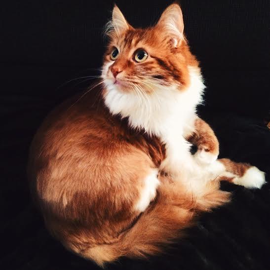 west town roly poly cat arthur mullen 3rdarm
