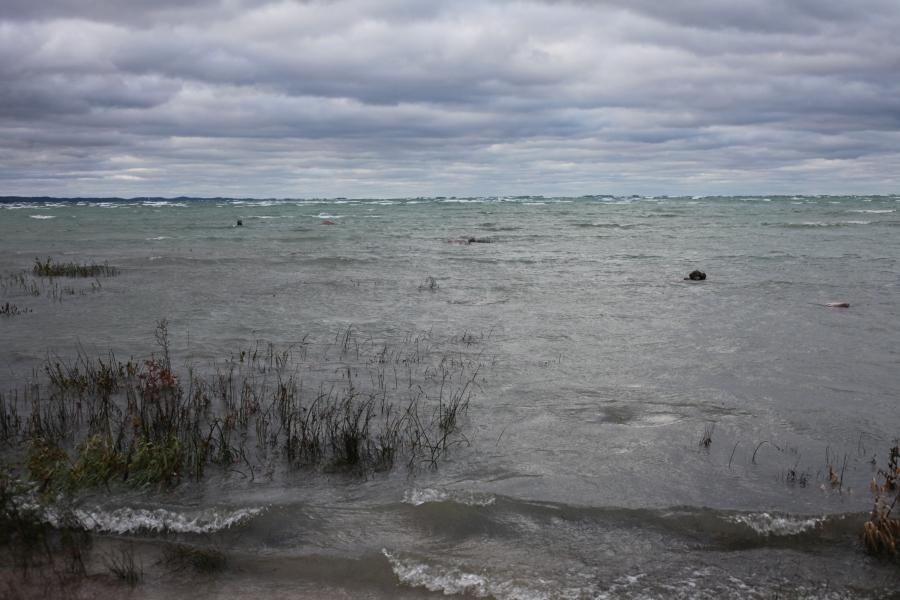 old mission state park swans feeding michigan peninsula 3rdarm