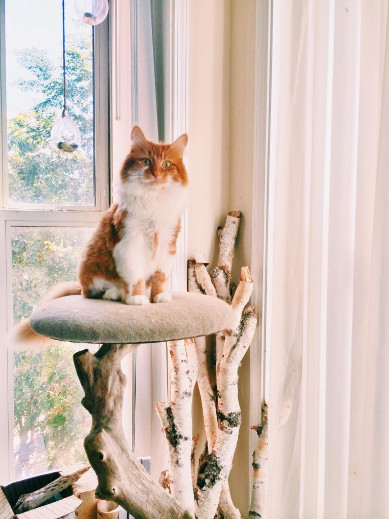 roly poly cat 3rdarm chicago cat tree birch arthur mullen