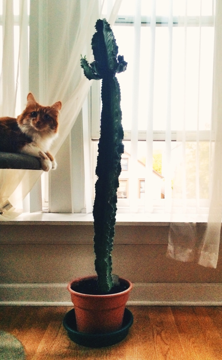 Roly poly cat Maine coon cat cactus cat tree window Erie street 3rdarm