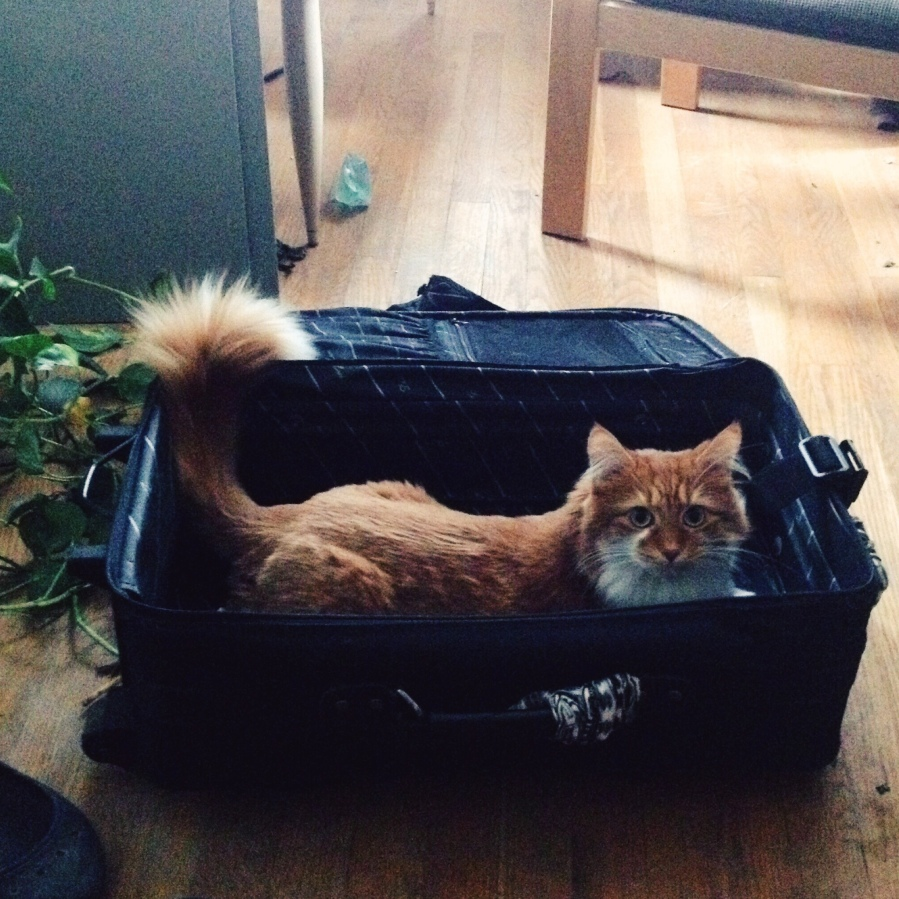 etta kostick jewelry renegade chicago 3rdarm roly poly cat maine coon cat in suitcase