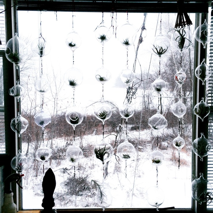 etta air plants terrarium winchendon glenn kostick glass 3rdarm handblown