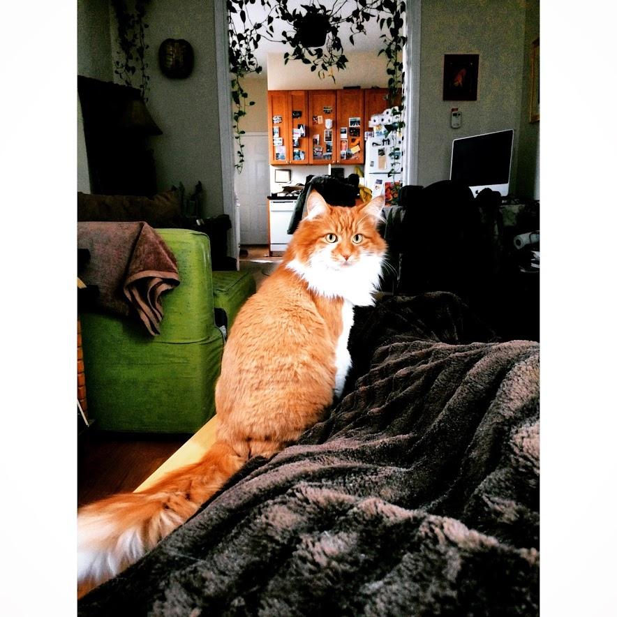 roly poly cat 3rdarm arthur mullen ethan goldwater nikki goldwater 3rdarm
