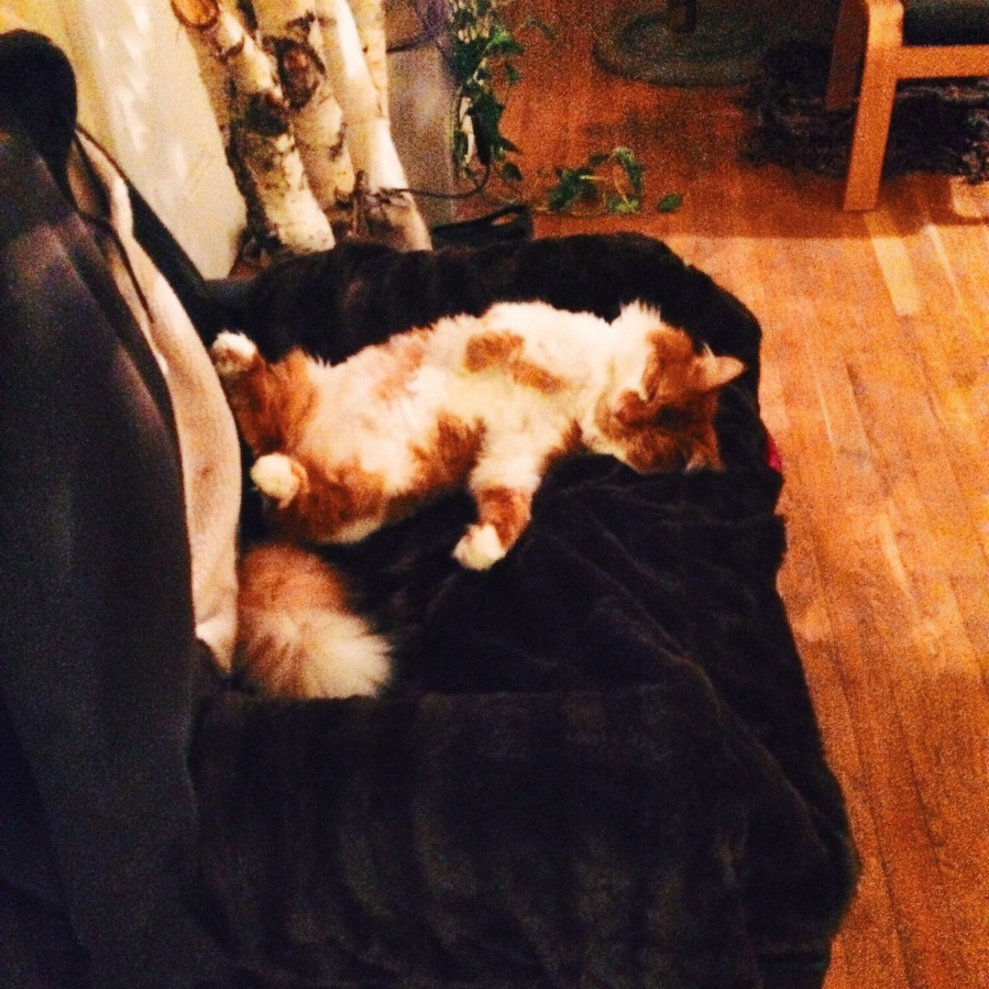 roly poly maine coon norwegian snow cat 3rdarm chicago arthur mullen orange white river north february sunset xoco