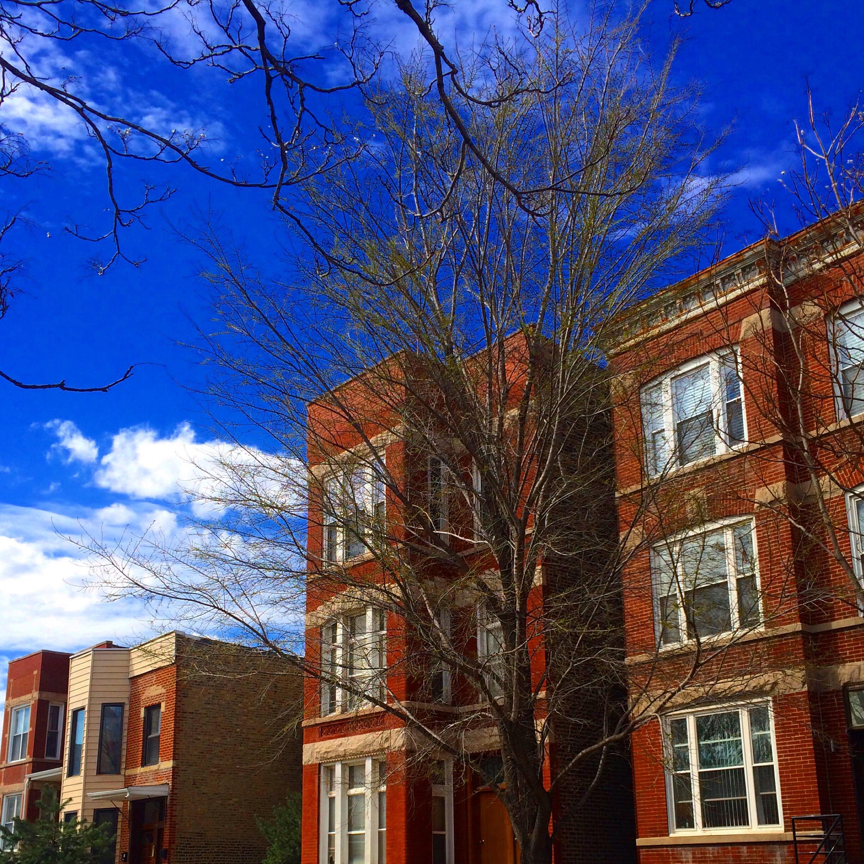 hibernation chicago spring tree buds blue sly west town erie ashland noble square 3rdarm