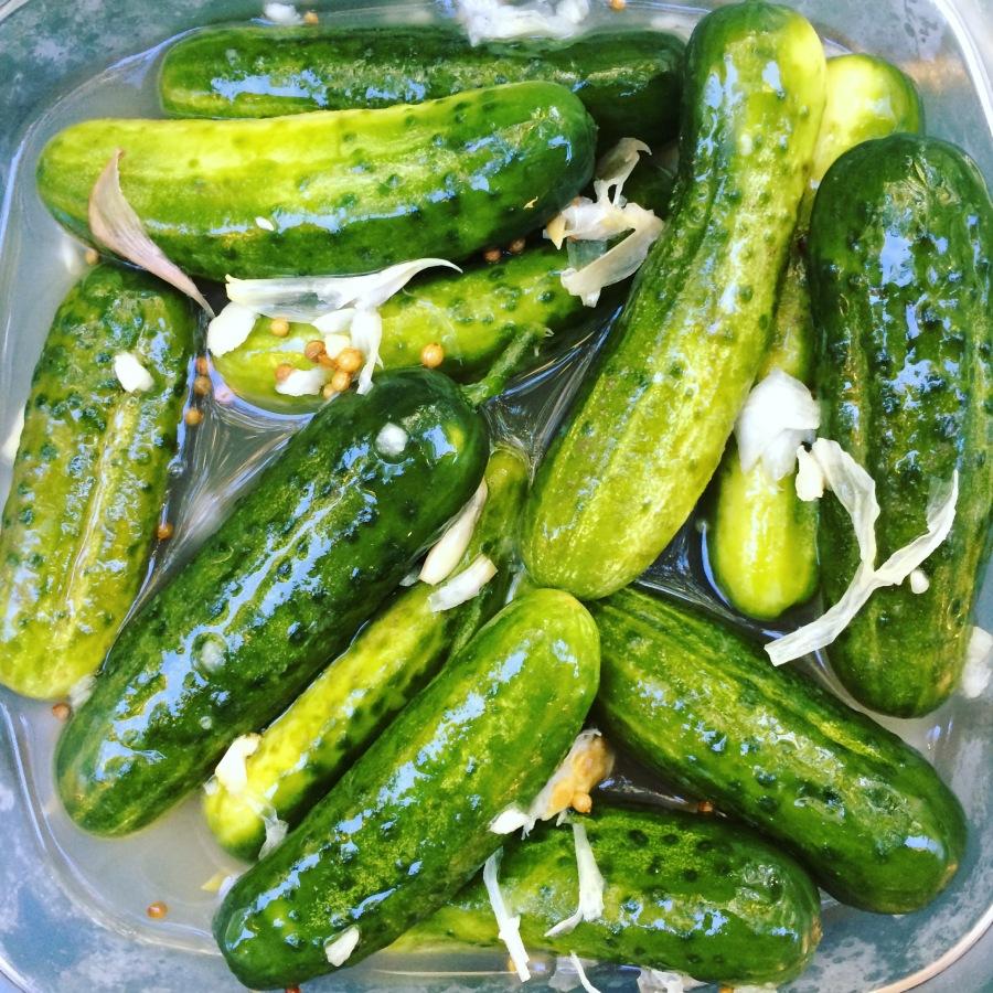 reins delicatessen sweet sour pickles vernon connecticut guilford connecticut skinsations pedicure arthur mullen 3rdarm