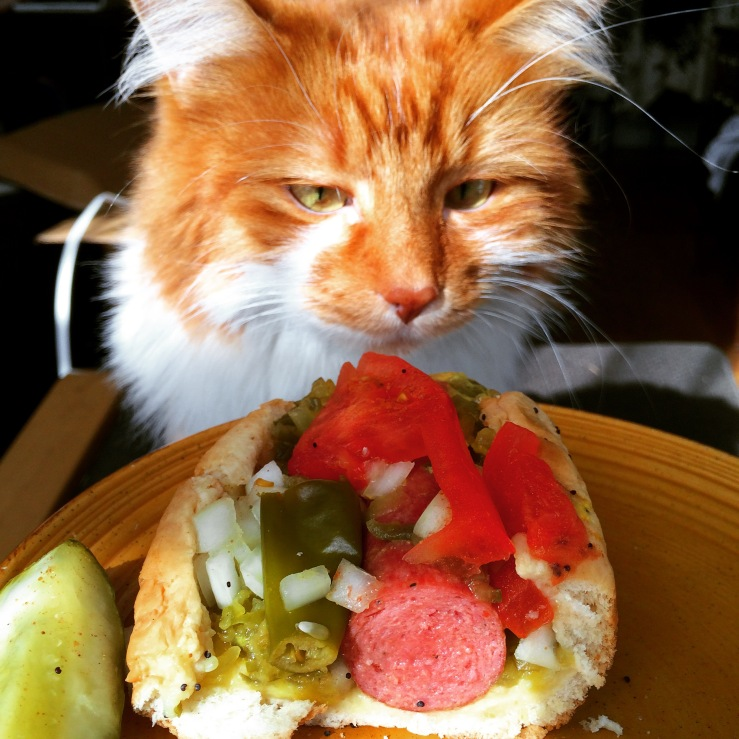 wendy santana xoco chicago cake carrot cake cream cheese 3rdarm roly poly cat chicago maine coon cat orange cat hot dog chicago style
