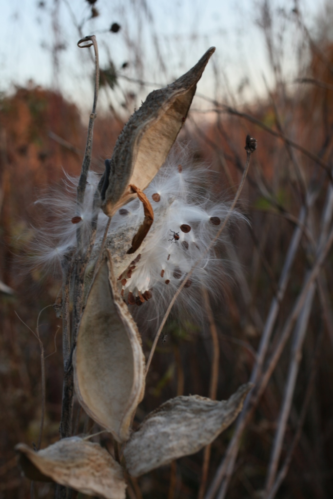 arthur mullen photographer xoco manager 3rdarm magic hedge montrose point bird sanctuary 2015 wilfredo bravo katharine mullen chicago