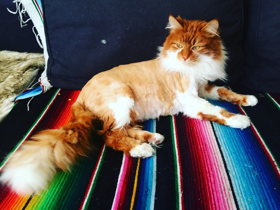 3rdarm roly poly cat maine coon cat arthur mullen chicago 3rdarm xoco manager rick bayless