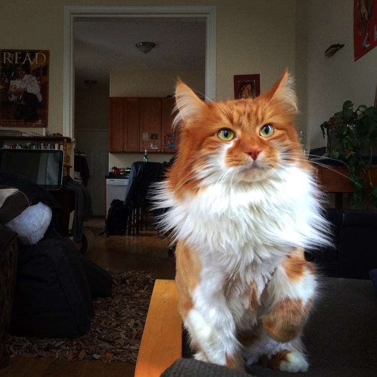 3rdarm roly poly cat maine coon cat arthur mullen chicago 3rdarm xoco manager rick bayless chicago sunset clouds skyline sky